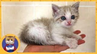 Отдаем спасенного котенка Снежинку в добрые руки