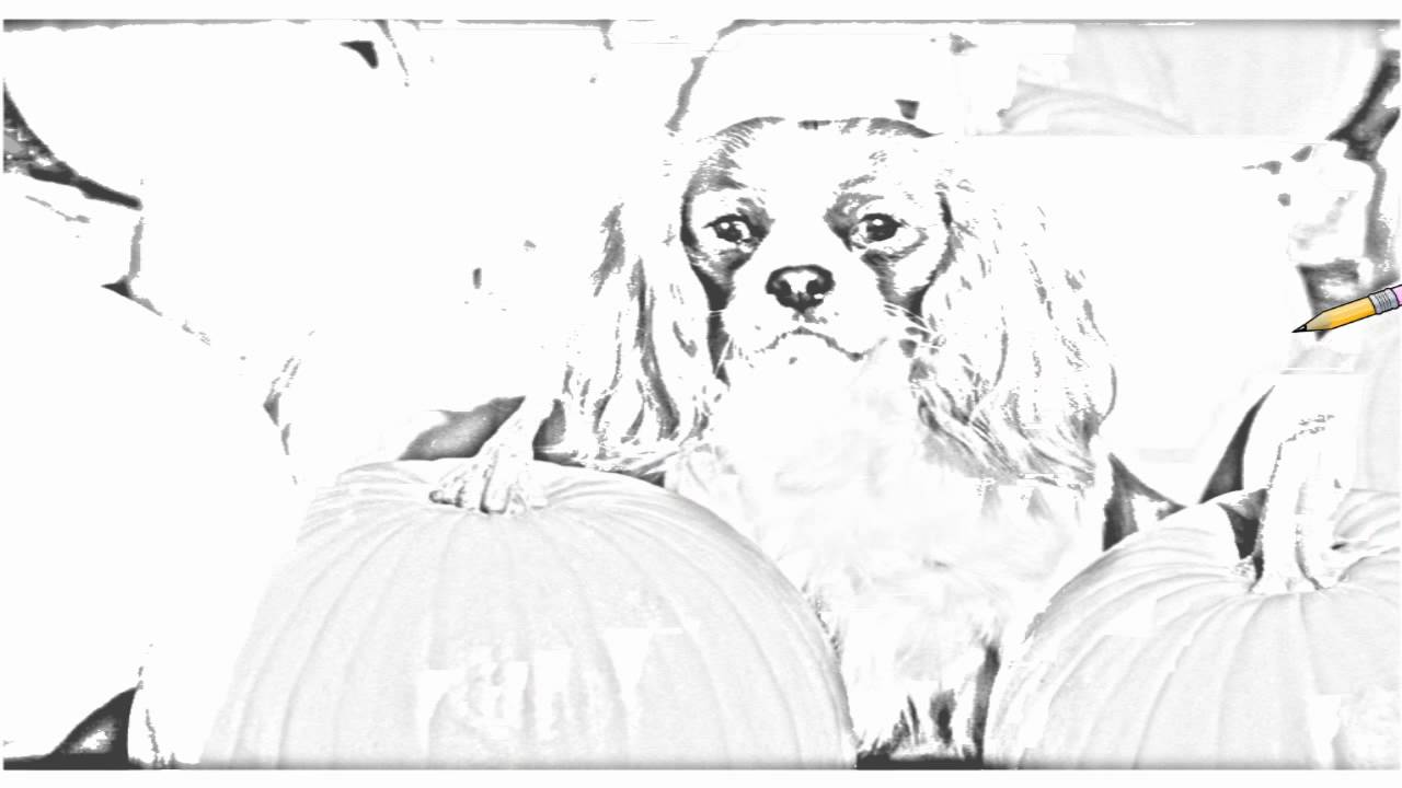 Auto Draw 2 Cavalier King Charles Spaniel Youtube