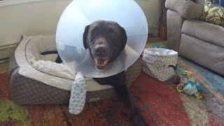 Roxy's Broken Toe