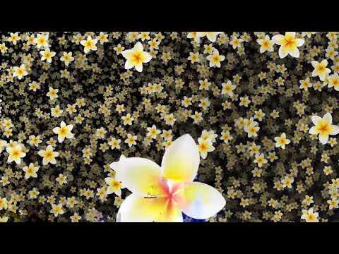 Flower Background Video Effects HD