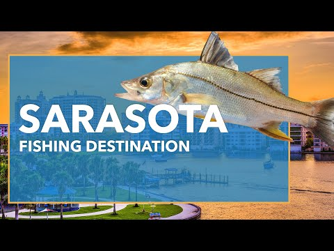 Fishing In Sarasota: All You Need To Know | FishingBooker