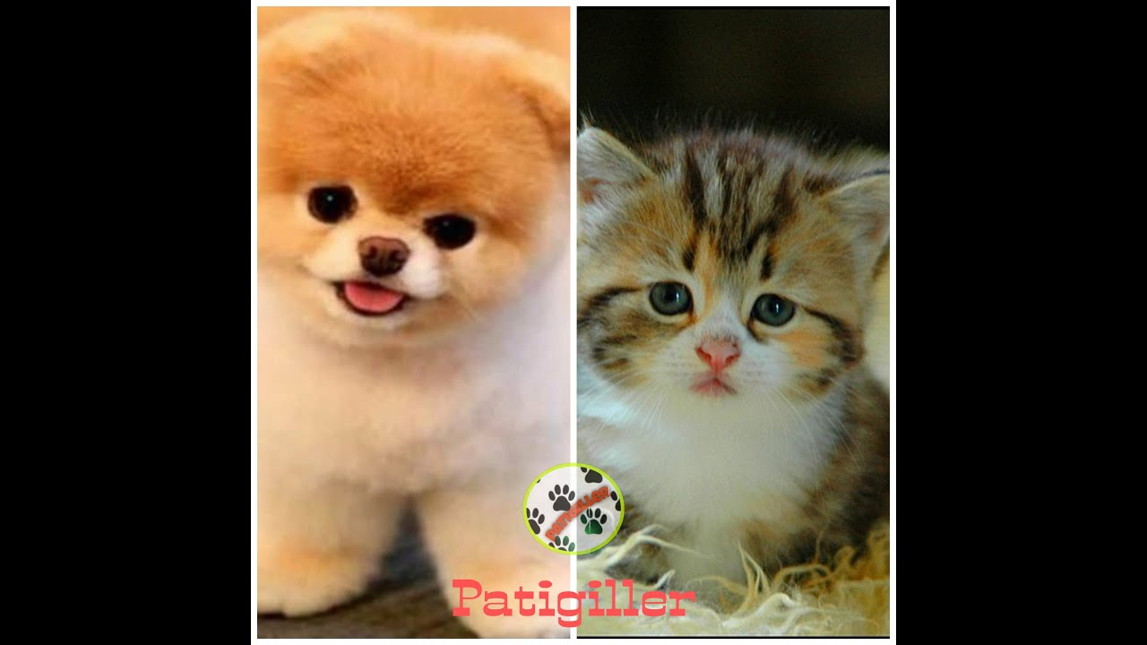 Download Cats, funniest creatures in animal kingdom - Funny cat compilation😹-Cute and Funny Cat Videos 😻