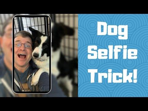 Dog takes a selfie - Trick Dog Tutorial