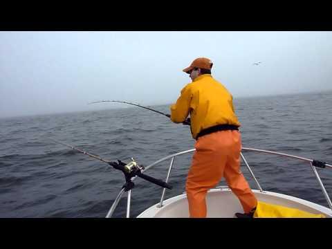 White Sea Bass Fishing - Monterey CA