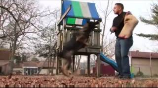 Sj K9 Solutions Video Mix - Schutzhund - Dog Training - New Jersey
