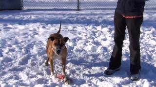 Meet Ivy, One Of Our Lovable Pets Up For Adoption At Worcester Animal Rescue League In Ma