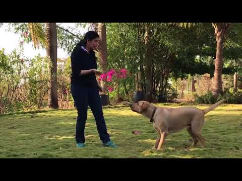 TEACH A DOG TO SPEAK