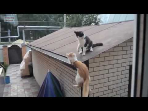 Funny Cats | Funny Cat Videos Better Than Funny Pranks