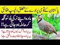Hidden And Interesting Facts About National Bird Of Pakistan || Chakor Bird || Chukar Partridge