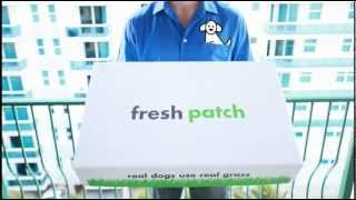 Fresh Patch : Disposable Dog Potty With Real Grass - Best Pet Supplies Review