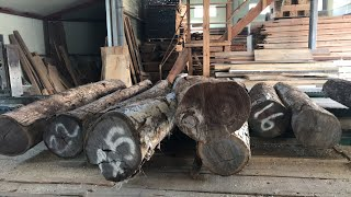 제재소 생중계- 보코테와 유창목 원목 슬라이스 제재
