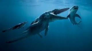 Extraña Criatura Devora un Tiburón en Australia