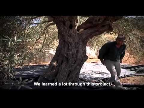 Olive Oil Production Project