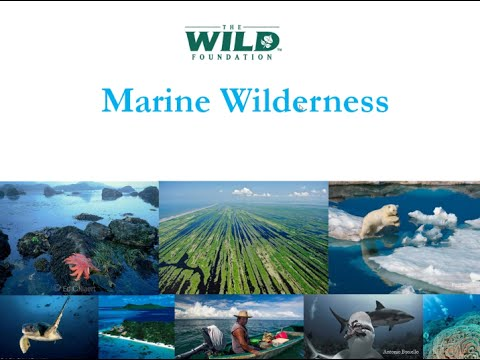 Marine Wilderness 10+10 Project: Bringing Back the Wild