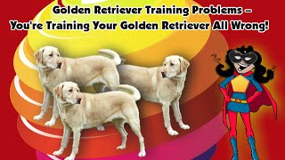 Golden Retriever Training Problems  - You're Training Your Golden Retriever All Wrong!