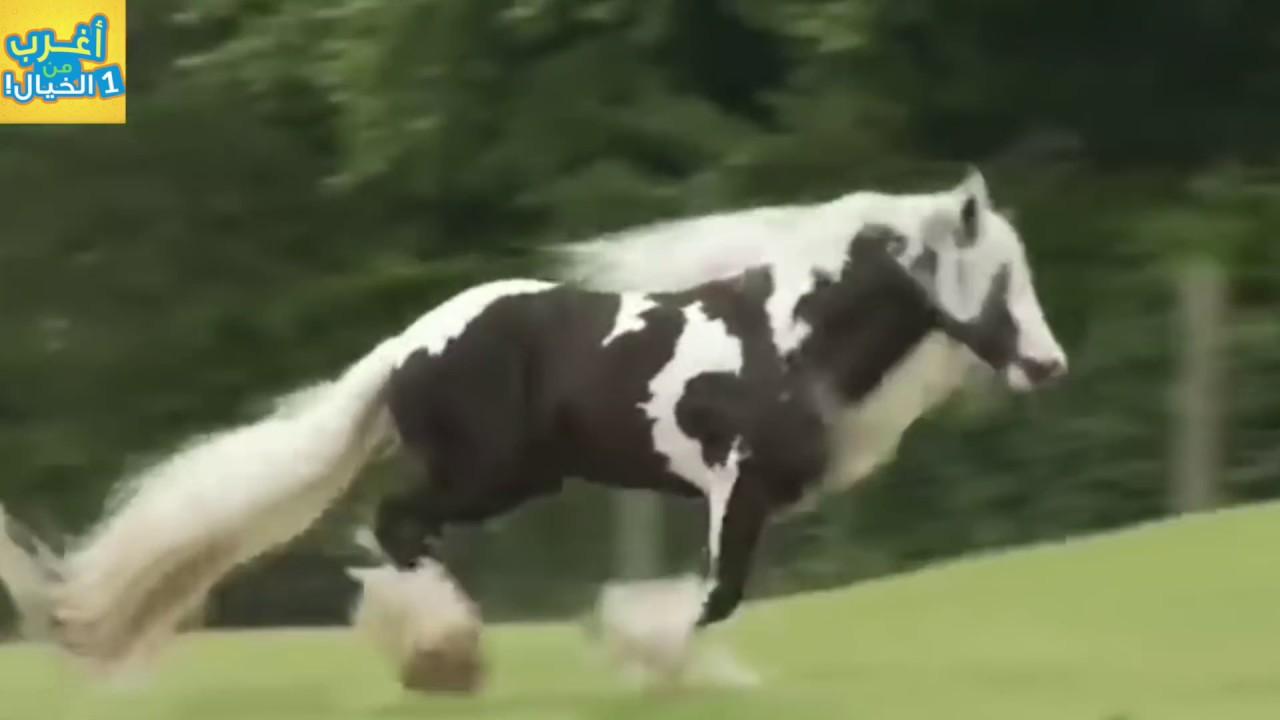 أغرب 10 خيول هجينة