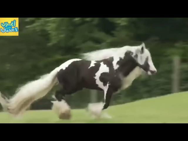 10 خيول هجينه لن تصدق انها موجوده ..!!!