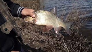 Рыбалка на ЯЗЯ ОКУНЯ И ГОЛАВЛЯ ЯЗЬ рыба МОЕЙ мечты