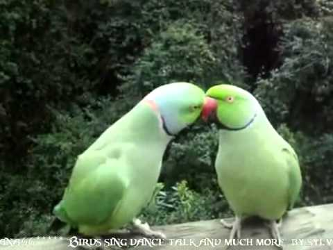 Birds sing, dance, talk and much more