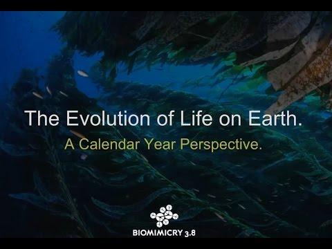 Earth's Calendar Year