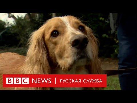 Псу спасли жизнь