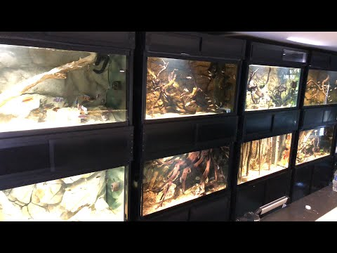 all my aquariums and fish live the king of diy youtube