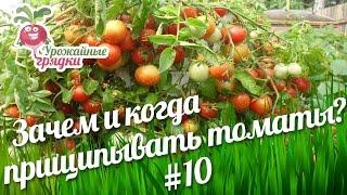 Зачем и когда прищипывать томаты? Часть 10 #urozhainye_gryadki(Здравствуйте уважаемые садоводы и огородники Что еще следует делать с томатами в теплице? За 40 дней (это..., 2016-08-14T12:00:02.000Z)