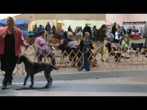 2016 Boise Dog Show