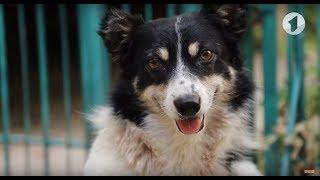 Пёс, на которого напал питбуль, выжил