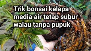 Pupuk Bonsai Kelapa Media Air