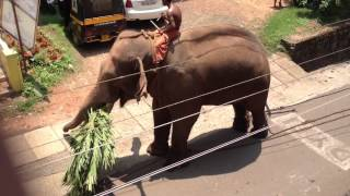 violent elephant in kerala