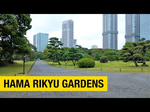 A Contemplative Walk at Tokyo's Hama Rikyu Gardens