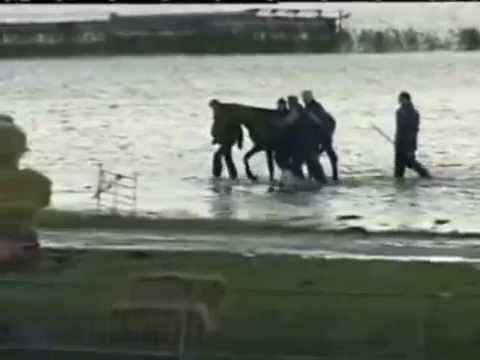 Rescue of 200 horses by 7 women in 2006 ( Netherland ) thumbnail