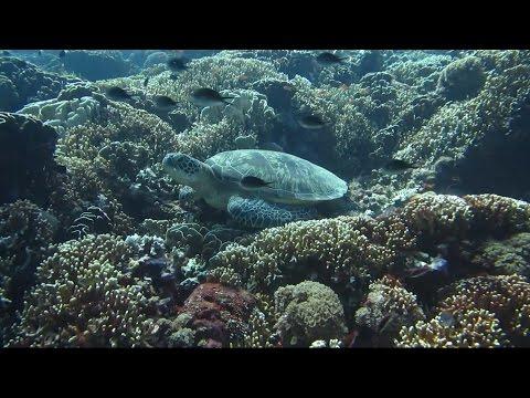 Yoga Brand Drives Ocean Conservation Awareness