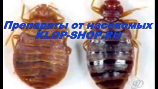 Уничтожение клопов самостоятельно(Если насекомые измучили, нарушили сон и поселились в вашем доме давно и надолго. Решение есть: предлагаем..., 2014-04-04T13:37:51.000Z)