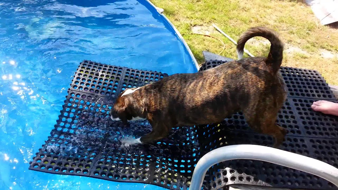 Dog Floating Pool Entry Mat Youtube