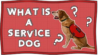 What is a Service Dog and Why Do People Need Them to Survive?   Operation Ouch   Nugget
