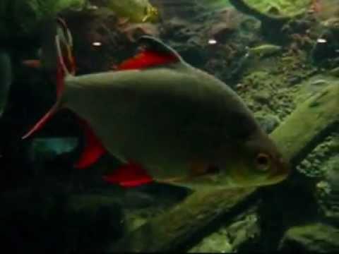 Dierentuin Artis Amsterdam : Het Aquarium