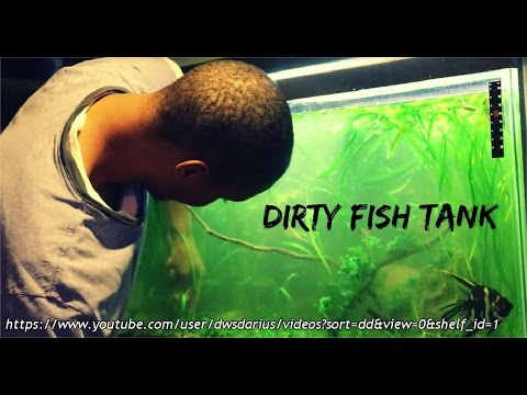 Cleaning A Dirty Fish Tank