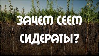Сидераты - белая горчица. Посадка весной(Ранний посев сидератов. Горчица, как удобрение, также особенное растение. У нее много преимуществ перед..., 2015-04-12T17:07:30.000Z)