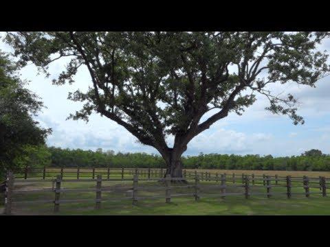 Ghirardi Compton Oak