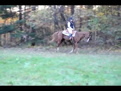Pleasure Riding Horse