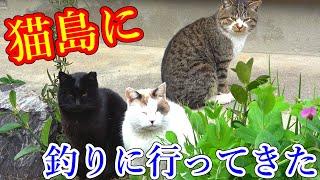 猫がたくさん居る島に穴釣りをしにいったら・・・