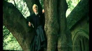 Гарри Поттер - Зайцев +1