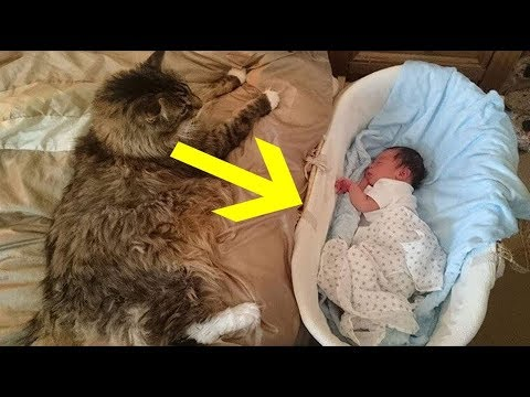 12 Maine Coon Cat Facts So Unreal It's Hard To Believe They're All True