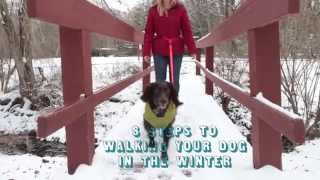 Tips For Safely Walking A Dog In Winter