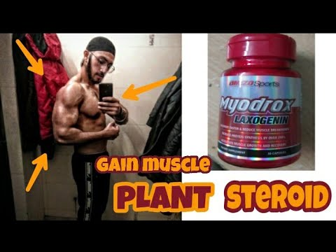 Supplement To Gain Muscle Without Side Effects THE PLANT STEROID