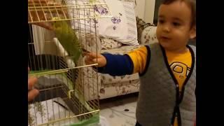 Berat ve Abisi Buğra muhabbet kuşu ile oynuyor.Berat hayvanları çok seviyor.