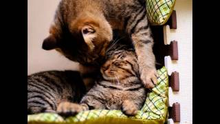 игривые котята кошки коты собаки и тигры