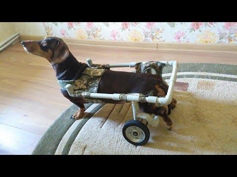Инвалидная коляска для собаки своими руками  DIY IDEAS MADE disabled carriage